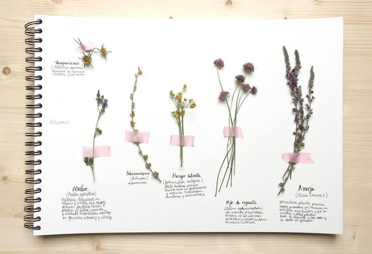 Aprovecha los paseos para recolectar flores silvestres y hacer tu herbario particular Siempre me ha gustado coger flores silvestres cuando salgo a pasear por el campo, pero me da mucha rabia no saber cómo se llaman ni qué propiedades tienen. Había que buscar una solución: así que hace unas semanas decidí hacer un herbario con …