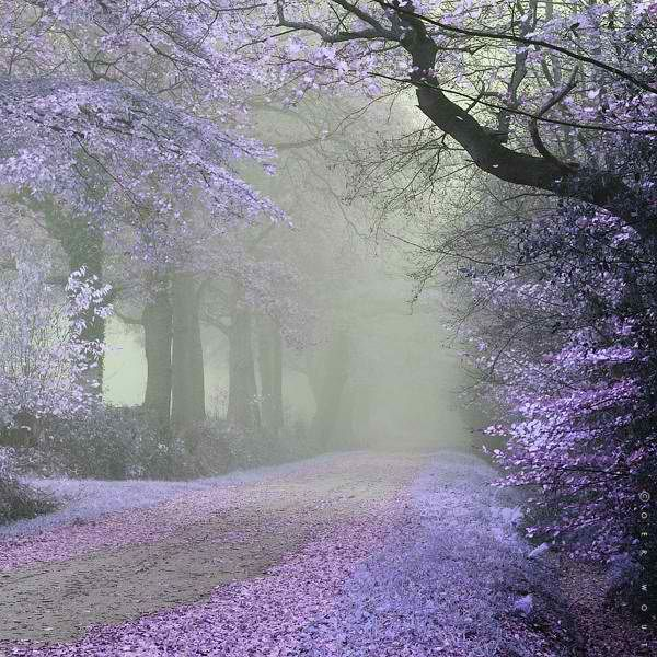 The long and winding road.....that leads to your door.....