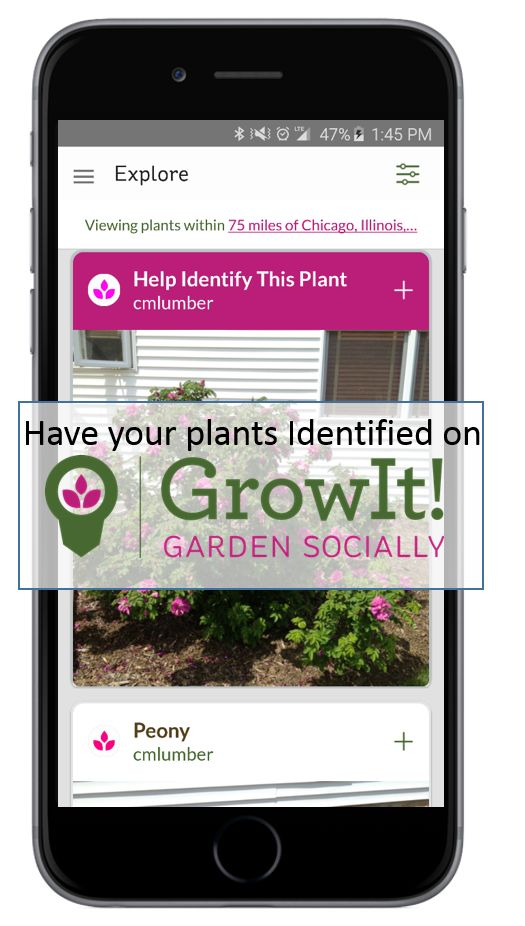 Unknown Plant? No Problem! Check out GrowIt! the hottest app in the world of plants. Have plants identified or just see what people are growing around you. Available for iPhone and Android!