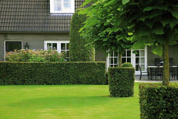 Garduri modulare cu plante � paravane ecologice