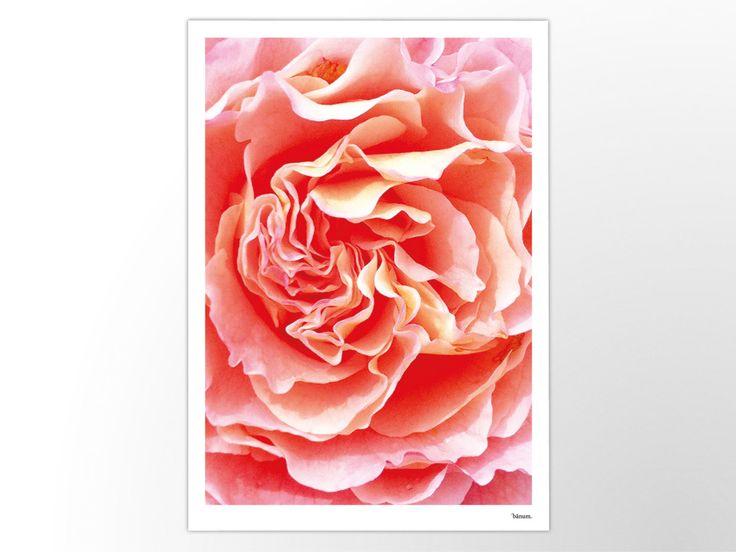 PURPUR — Kunstdruck, Poster, moderne Fotografie, skandinavisches Design, minimalistisch, Rose, Blume, Garten, Sommer ,Sonne, Rosa, Mikro von banum auf Etsy