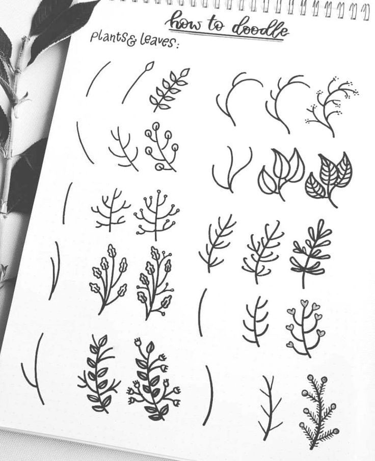 A Simple Guide How To Doodle Plants And Leaves By Ig Splendidscribbles Easy Doodle Art Bullet Journal Doodles Bullet Journal Art