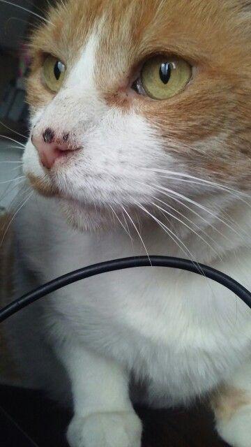 Caballero niño gato