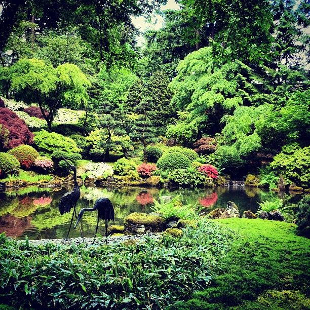 japanese koi garden ponds koi pond at portland japanese garden flickr photo sharing