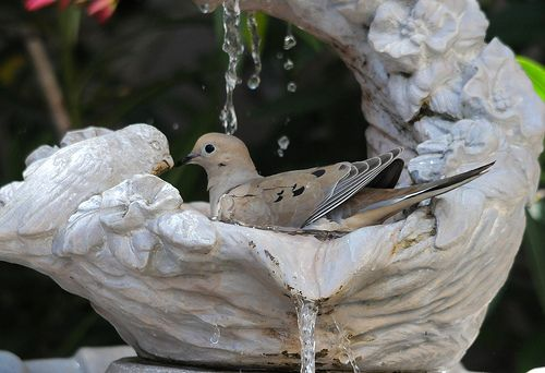 140 Best Garden Statues And Fountains Images On Pinterest