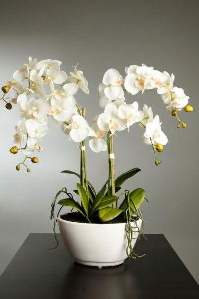 Mejores 19 imágenes de orquídea en Pinterest | Plantas, Cuidado de ...