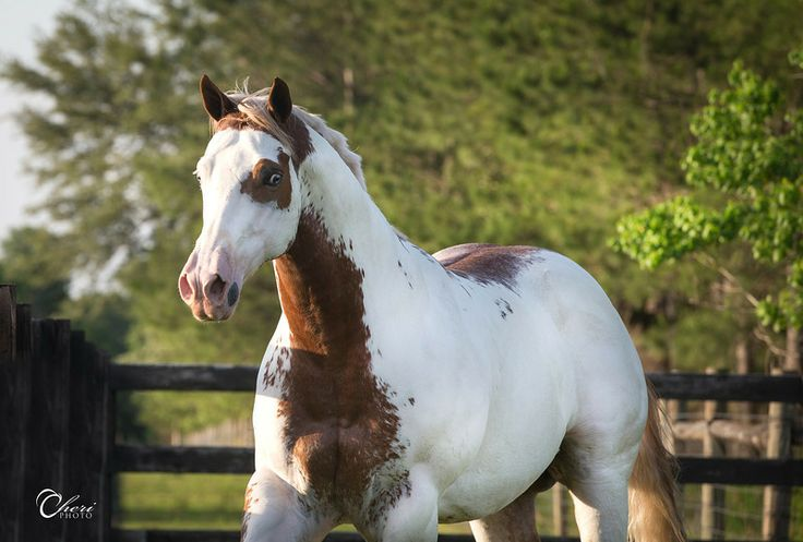 1228 best images about Equine Color References on ... - photo#45