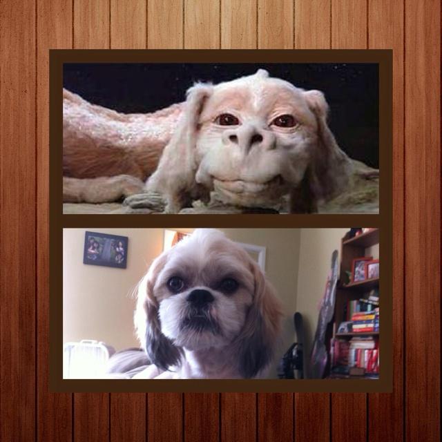 My dog new hair cut