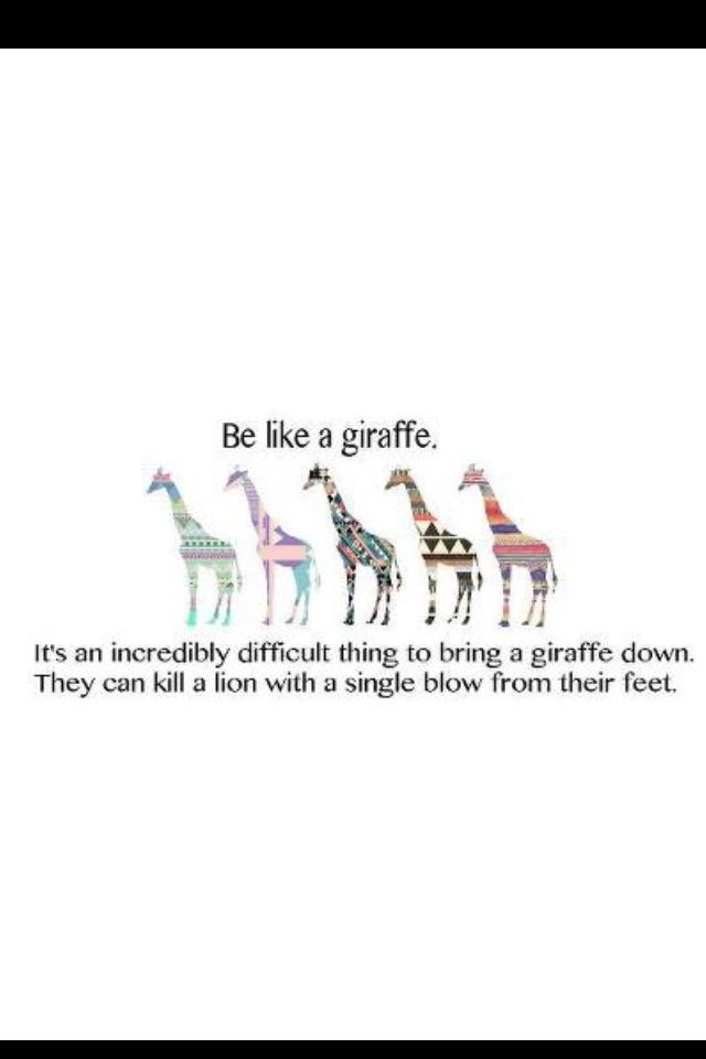 Giraffe quote <3                                                                                                                                                      More