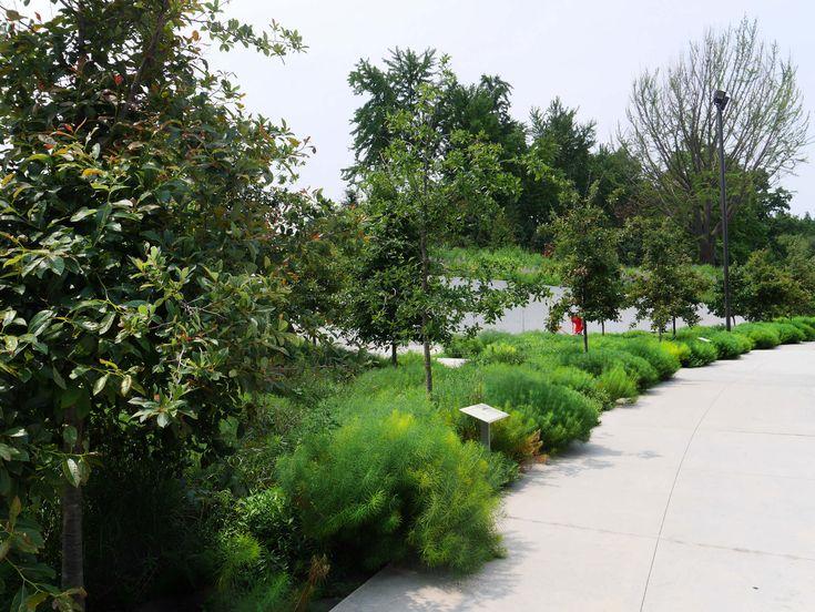 As 25 Melhores Ideias De Ny Botanical Garden No Pinterest Brooklyn Plano Principal E Dale Chihuly