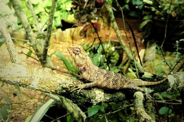 Lovely Lizard In rest & freely