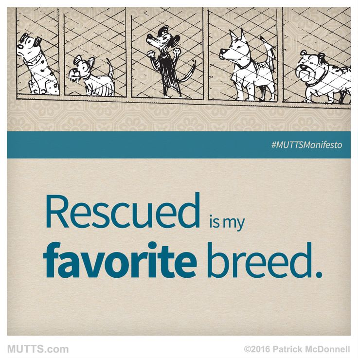 What breed is your rescue?  #MUTTSofinstagram #MUTTSManifesto #shelteranimals #dogsofig #catsofig #petsofinstagram
