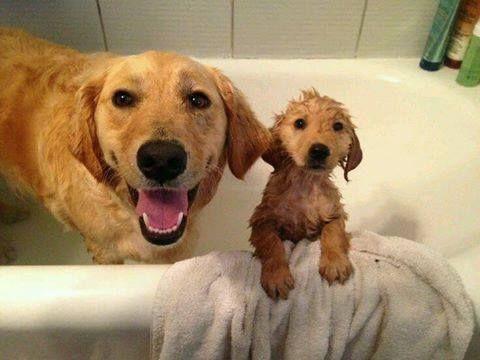 Hora del baño..