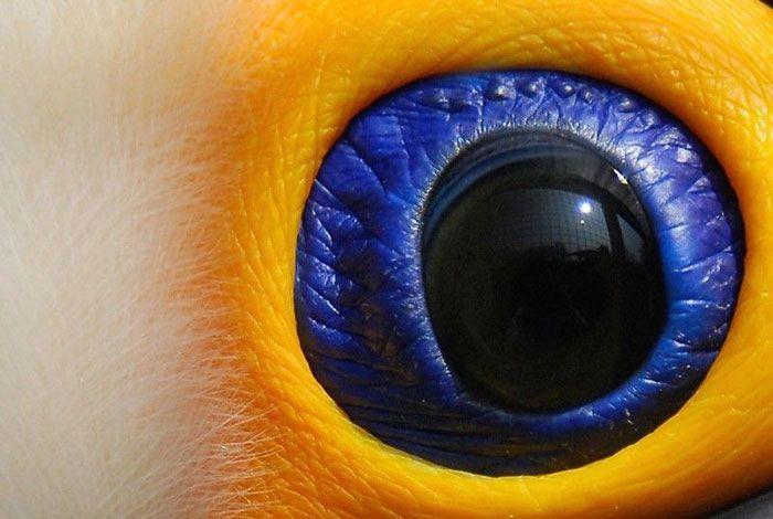 take a guess?http://images5.fanpop.com/image/photos/28300000/Animal-Eyes-eyes-28327450-700-470.jpg