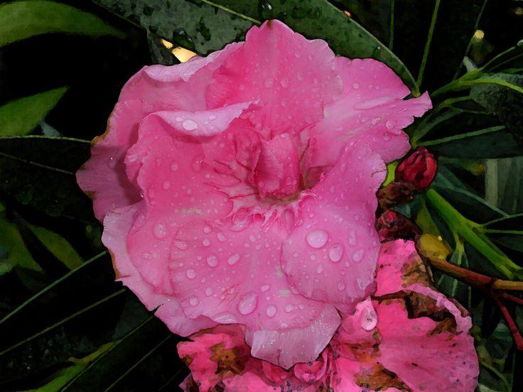 gocce di pioggia oleandro www.angelapercaso.net