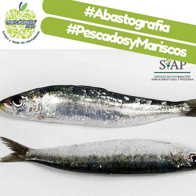 #SabíasQue #México es el 5to mayor productor de sardina en el mundo. #Abastografia   www.mercabastos.com #ComprayVendeSinIntermediarios  ¡Anunciate #Gratis adquiriendo tu #TiendaOnline con la Suscripción #PREMIUM y comienza a vender por #Internet!