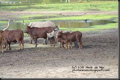 The Nice Animal Pictures: SBB 23 oktober 2015: Neuzelende kalveren