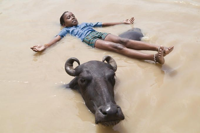 Boy playing with buffalo, Ganges, India