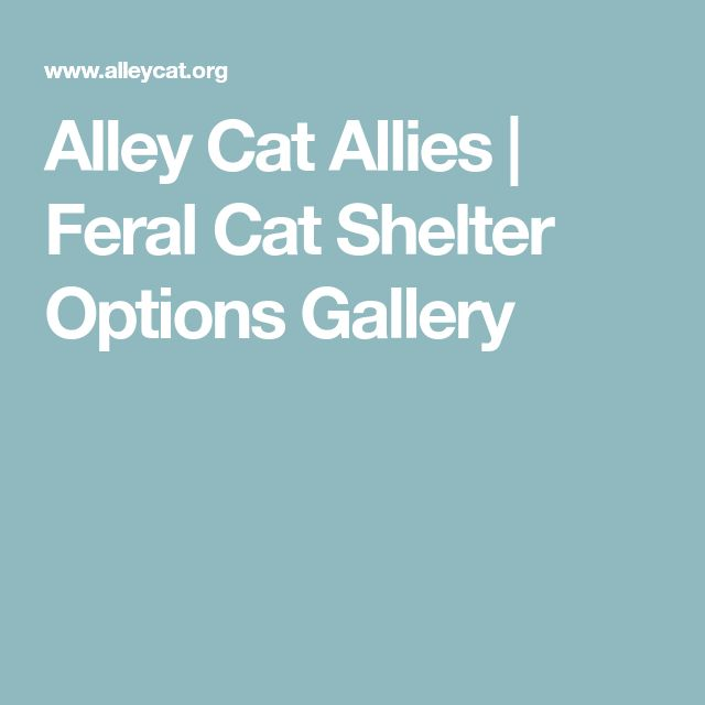 Alley Cat Allies | Feral Cat Shelter Options Gallery