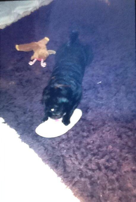 Destroying my nanas slippers