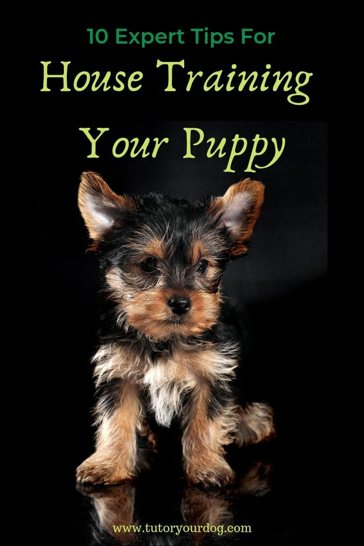 10 Expert Tips For House Training Your Puppy Tutor Your Dog