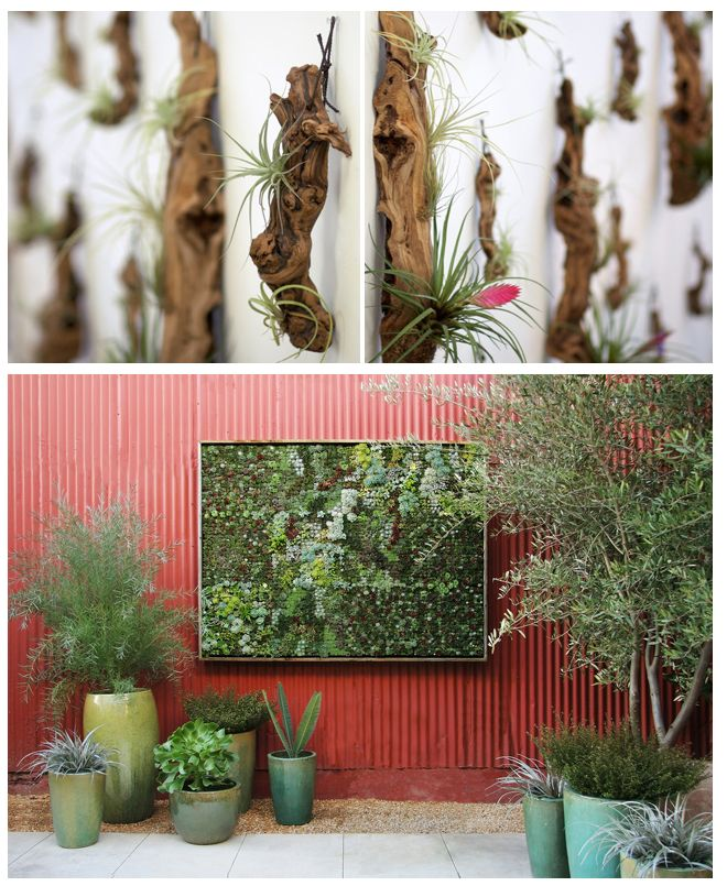 Beautiful hanging tillandsia gardens