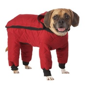 Rainsuits for dogs!Doggie Coats, Ordinary Doggie, Quilt Red, Weather Master, Pets Dreamboard, Master Quilt, Quilt Rainsuit, Weatherproof Suits, Pets Products