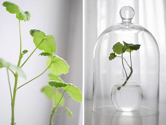 living plant in cloche