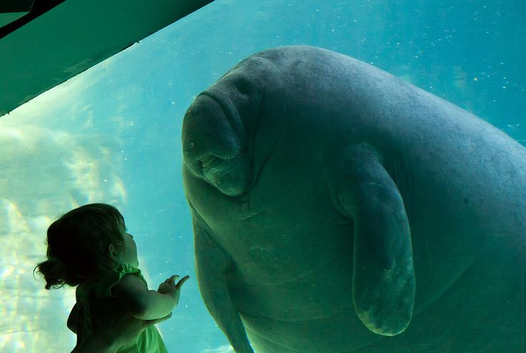 47 Best Zoological Places Amp Spaces Images On Pinterest