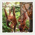 Sepilok Jungle Resort, Sandakan Sabah (Borneo) Malaysia #travel #Malaysia #Borneo #jungle #rainforest