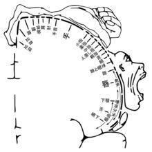 Motor homunculus-ja - Homunculus corticale - Wikipedia