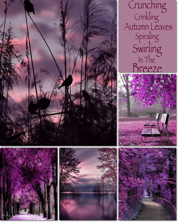 přes 25 nejlepších nápadů na téma tagesdecke lila na pinterestu, Hause deko