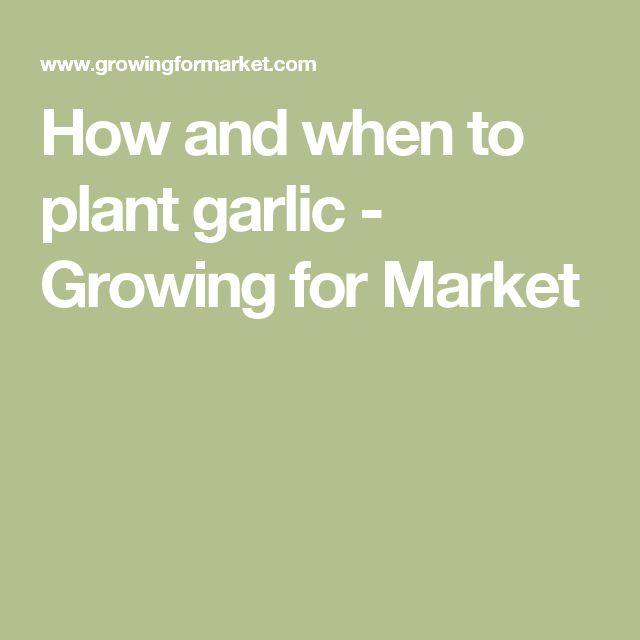 How and when to plant garlic - Growing for Market