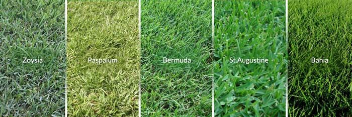 Choose A Grass Type For Your Lawn Lawn Dethatcher Reviews Grass Type Bermuda Grass Dethatching Lawn