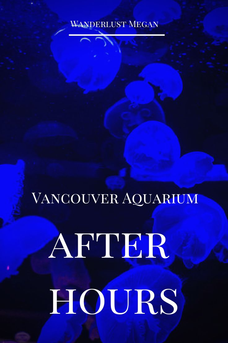 Vancouver Aquarium After Hours - A unique event to experience for adults only in Vancouver, BC