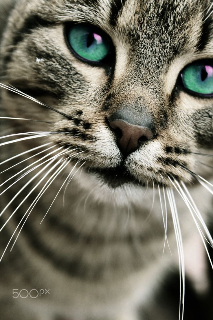 cat's eyes - lovely kitty with amazing eyes