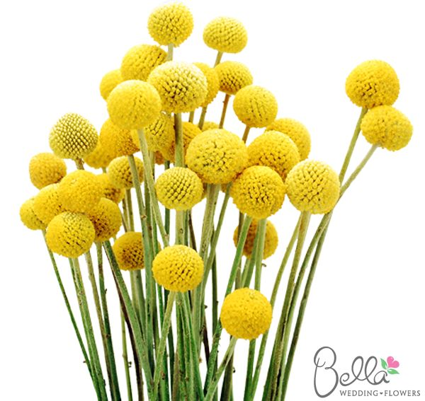 The 35 best yellow wedding flowers images on pinterest yellow billy balls craspedia as a future bride it can sometimes take mightylinksfo