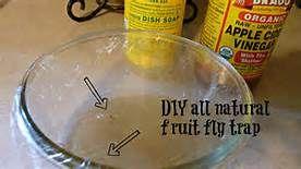 Homemade Spray To Kill Flies - - Yahoo Image Search Results