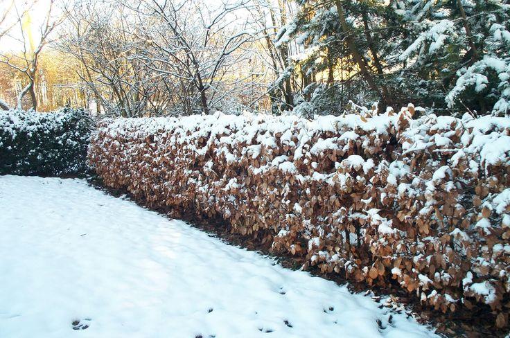 106 best l 39 hiver images on pinterest winter conservatory and winter garden. Black Bedroom Furniture Sets. Home Design Ideas
