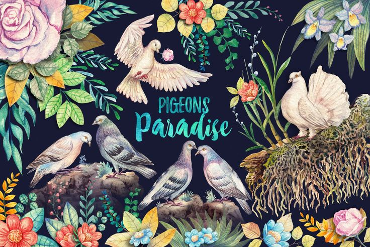 Watercolor Pigeons Paradise by iGRAPHOBIA on @creativemarket