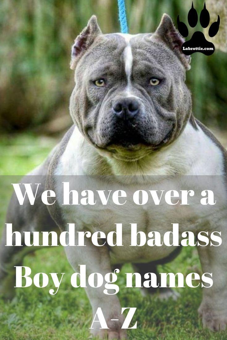 400 Boy Dog Names A Z Dog Names Boy Dog Names Girl Dog Names
