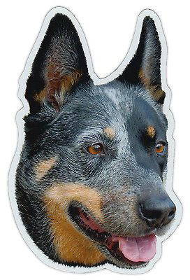 Magnetic bumper sticker - #australian cattle dog magnet - #cars, #trucks, suvs,  View more on the LINK: 	http://www.zeppy.io/product/gb/2/142047391744/