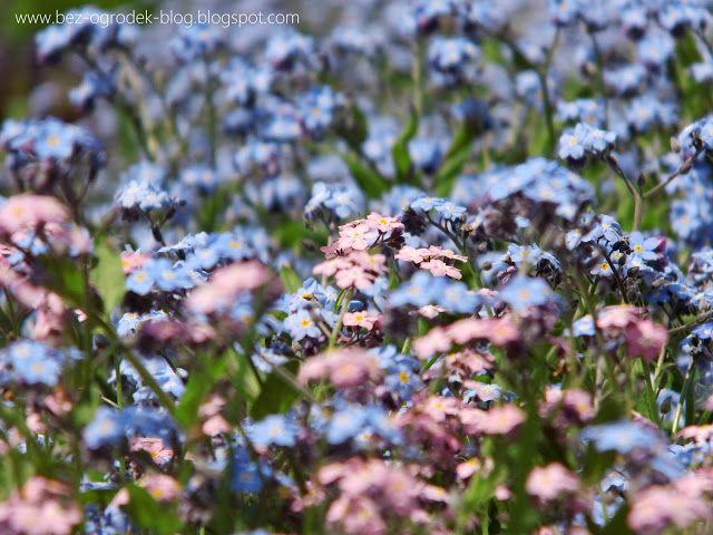 Rose Quartz & Serenity - My flower inspirations. Forget-me-nots