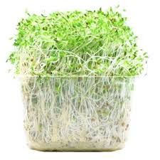 Alfalfa sprouts are cool and slightly bitter (drying so they clear damp/edema/diarrhea) and they benefit the stomach and spleen, as well as lubricating the intestines. Alfalfa sprouts are great for swelling, constipation and skin lesions. For constipation: eat the sprouts raw. Swelling: boil tea and drink 3 times a day. Skin lesions: apply mashed sprouts topically. Reference: The Tao of nutrition, Maoshing Ni - Cathy McNease - Sevenstar, Communications - 1987