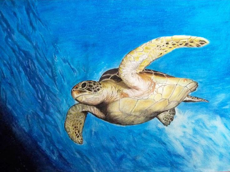 Marine turtle, made with colored pencils.