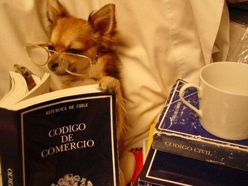 Image result for dog reading book