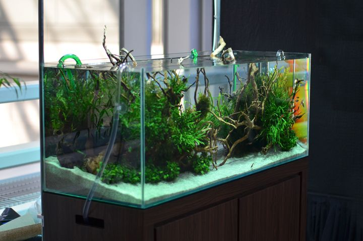 To start with, good aquarium will help visitors remember YOUR venue. Its uniqueness can be indicative of a challenging, innovative and pro-active management. Aquariums provide quiet and safe entertainment for children if you ask me.