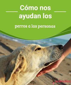 Cómo nos ayudan los perros a las personas Solemos pensar que nosotros somos los que aportamos a nuestros perros. Pero hay otra versión de la realidad: conoce cómo nos ayudan los perros. #perros #ayudan #personas #curiosidades