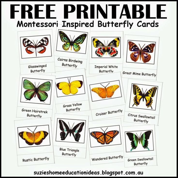 Suzie's Home Education Ideas: Part 2 - A hands-on Study about Butterflies