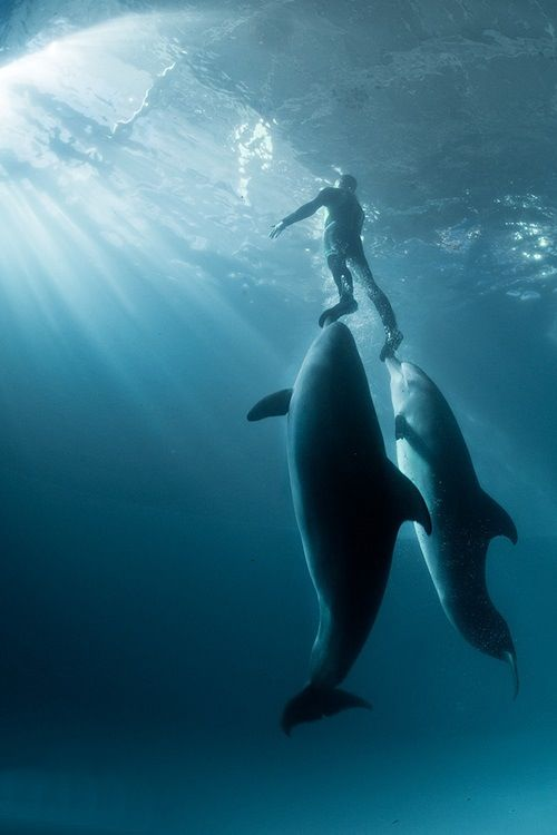 183 best Dream Job images on Pinterest Marine life, Dream job - marine mammal trainer sample resume
